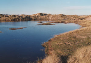 Flooded dune slack at Aberffraw (Anglesey). Photo: © 2001 D. Perkins.